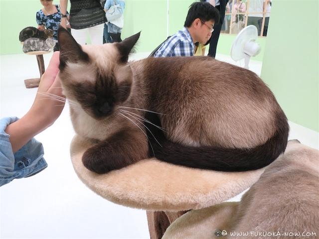 Cat Fair 2016 008