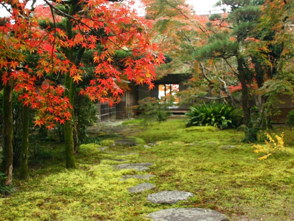 Fukuoka Autumn Leaves Guide 2019 Fukuoka Now