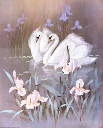 Animal Print Pink Wallpaper Swans With Waterlilies Fine Art Print By T C Chiu At