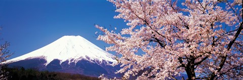 best kitchen mats building an outdoor mt fuji cherry blossoms yamanashi japan fine art print by ...