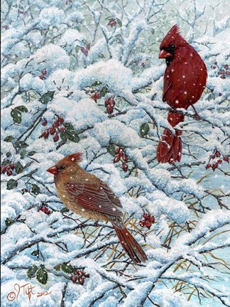 canvas prints for living room cheap couches winter cardinal painting fine art print by jeff tift at ...
