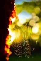 Sun Catcher by Scott Nelson