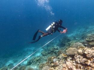 eco diver maldives