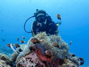 diver looking at anemone fish