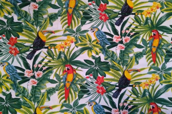 tropical toucan perroquet