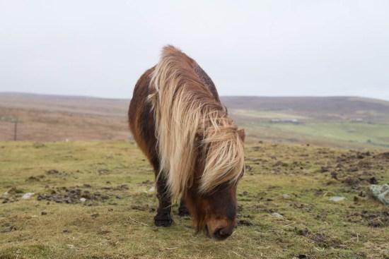 Shetland, Up Helly Aa, Scotland Travel Guide