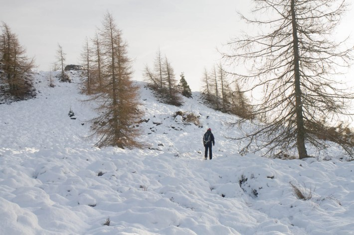 A man walking through the snow up a hill. The pine trees are bare in winter.