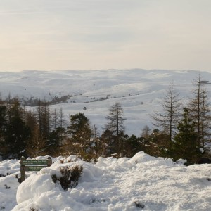 Birnham Hill, Perthshire, Scottish Travel Blog