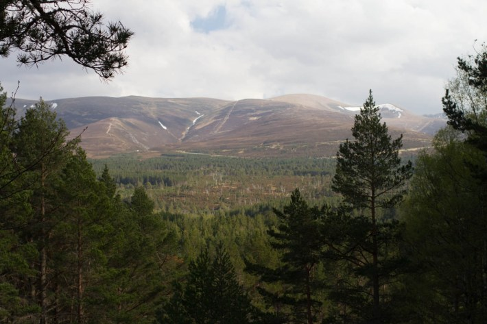Cairngorms woodland