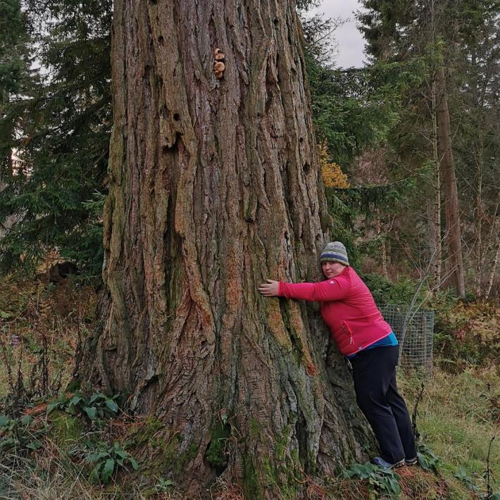 Photo of a woman hugging a Giant Redwood tree.