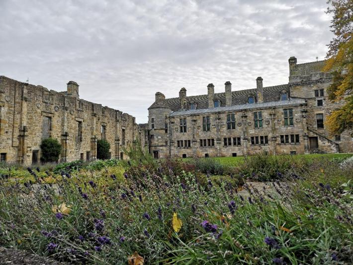 Falkland Palace, Fife. Lavender borders in the foreground and the palace walls behind