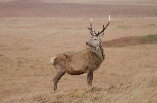 Wildlife in Scotland