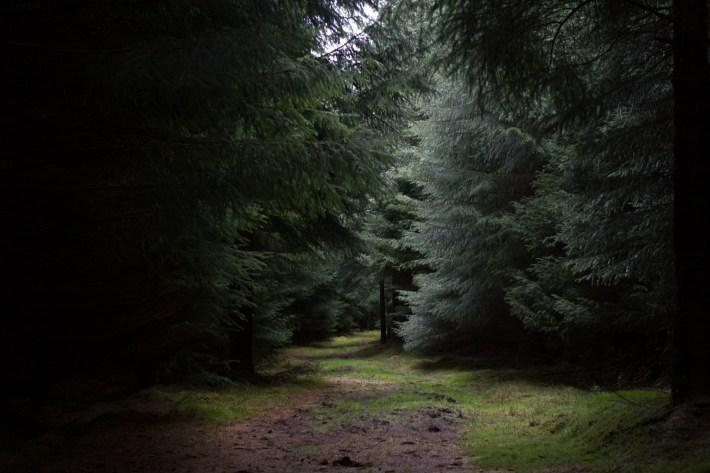 Dark path at Clashindarroch Forest