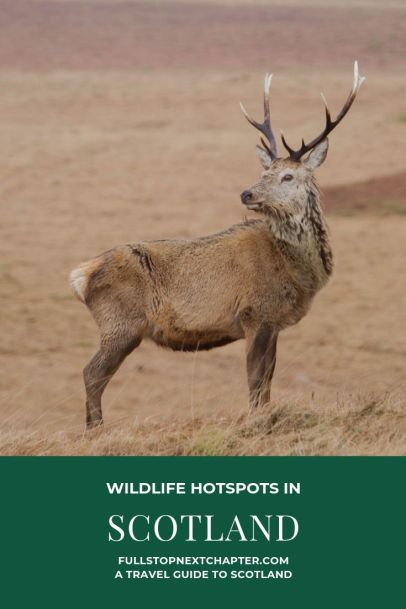 Pin for Later. Wildlife Hotspots in Scotland
