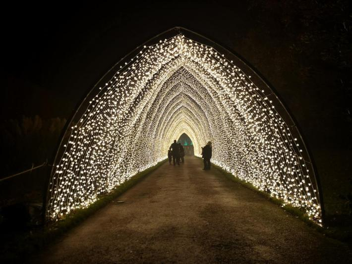 Christmas at the Botanics. Cathedral lights archway