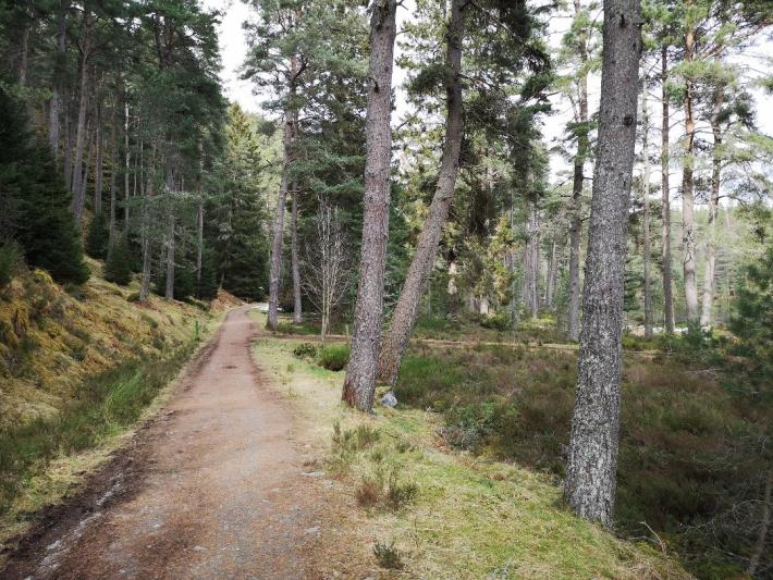 Uath Lochans, Glen Feshie, Cairngorms