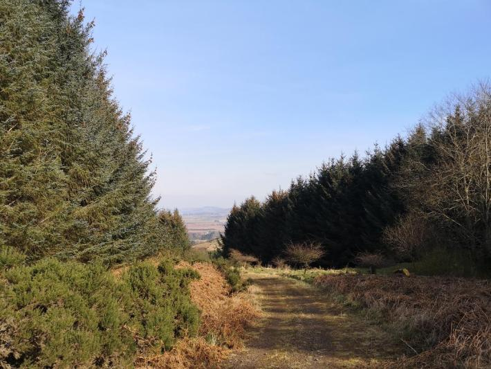 Hillside in Perthshire with a treelined view - little walks from home during lockdown