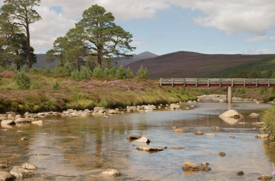 Photo of a river in the Cairngorms. There is a small wooden bridge crossing in the distance. The hills are covered in heather and there are some pine trees