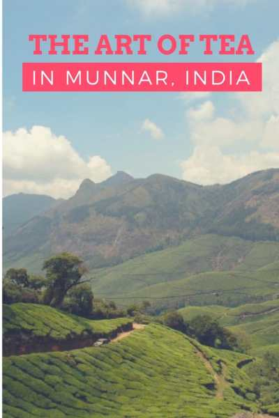 High Tea: The Art of Tea Making in Munnar, India