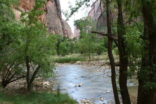 """Zion National Park, View up the trail leading to where the 16 mile """"Narrows"""" walk comes out of the canyon."""