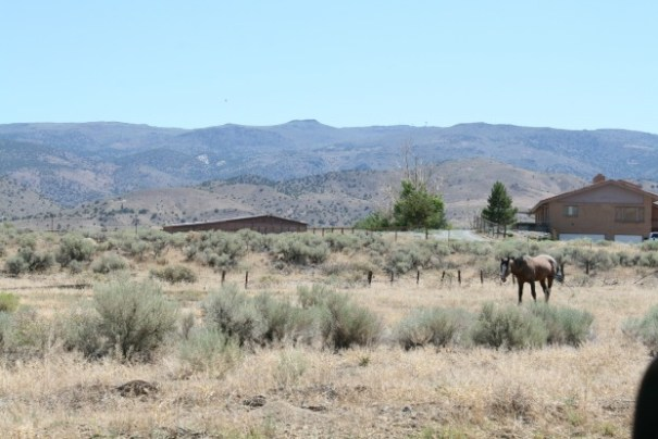 Another Wild Horse not far off the road.