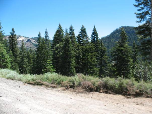 Forrest primeval at entrance to Lassen