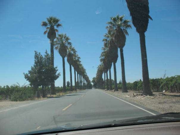 Palm trees line many of the roads through the vineyards.