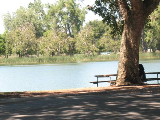 Lodi Lake, a picture for our kids that had a great goose adventure here many years ago.