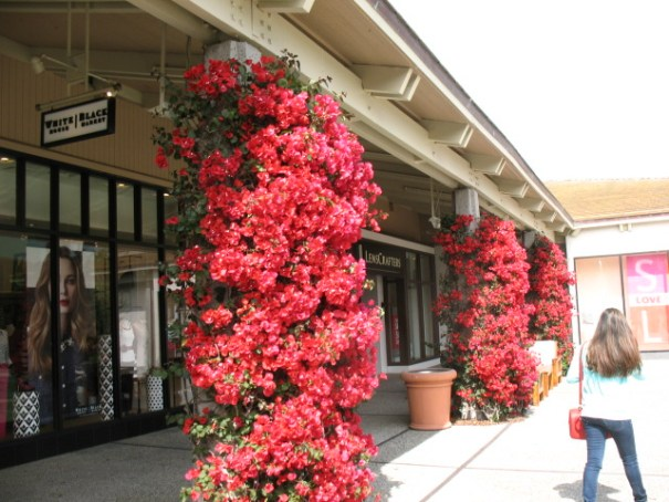 The Del Monte Shopping Center was in full bloom for our visit.