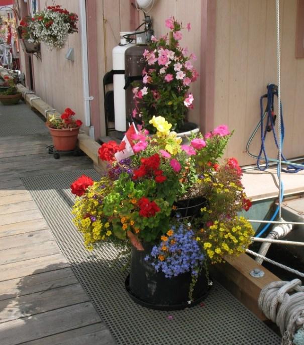 Beautiful flowers everywhere in Victoria.