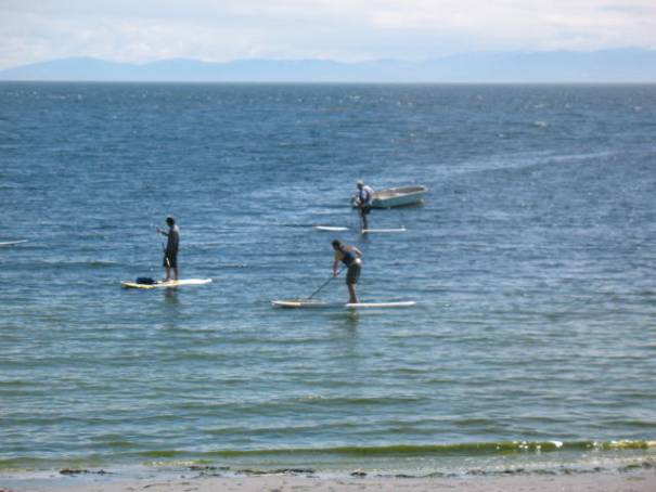 Paddle boards.