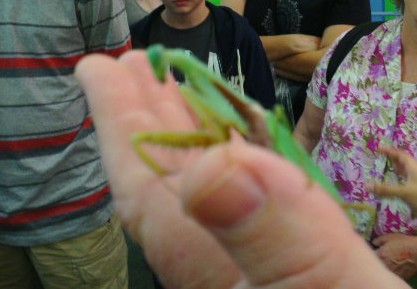 Praying Mantis in my hand!