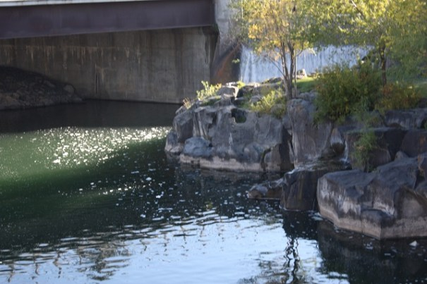 Idaho Falls has a wonderfully developed river area.  A lateral dam creates about a half mile of falls, just beautiful.