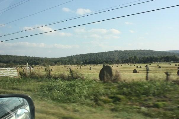 A ton of Hay.