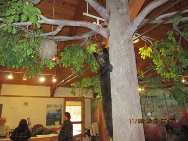 Demonstration bear climbing a tree.