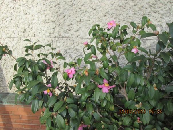 Edie's penchant.  Tough November flowers.