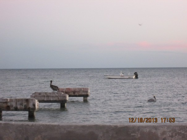 Saw many pelicans diving into the water for food.