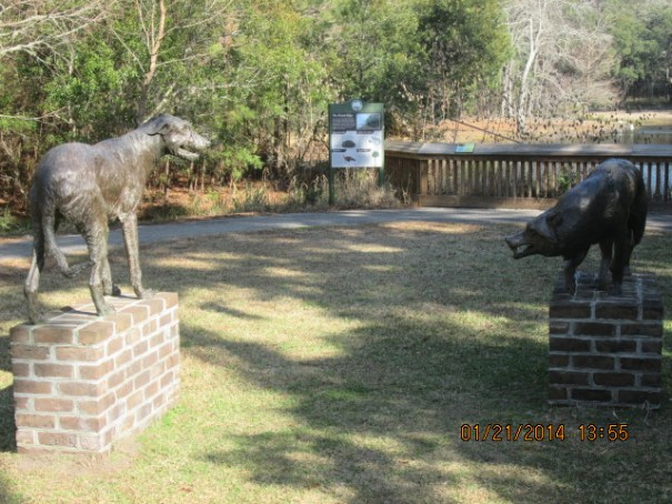 Wolfhound vs Wolf