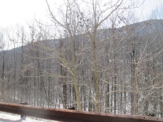 Shenandoah National forest.