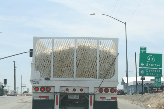 Gilroy is the garlic capitol, but a fungus in the dirt has stopped farmers from growing it there.  But that is where the processing plants all are, so this is a common site headed west.