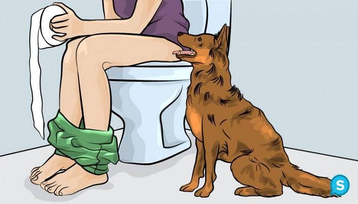 Εσείς το γνωρίζετε; Δείτε ΓΙΑΤΙ ο Σκύλος σας, σας ακολουθεί όταν Πηγαίνετε στο Μπάνιο και θα Πάθετε Πλάκα!