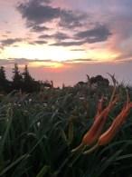 環山雅築 Mountain Lodge 金針花と朝日が映える