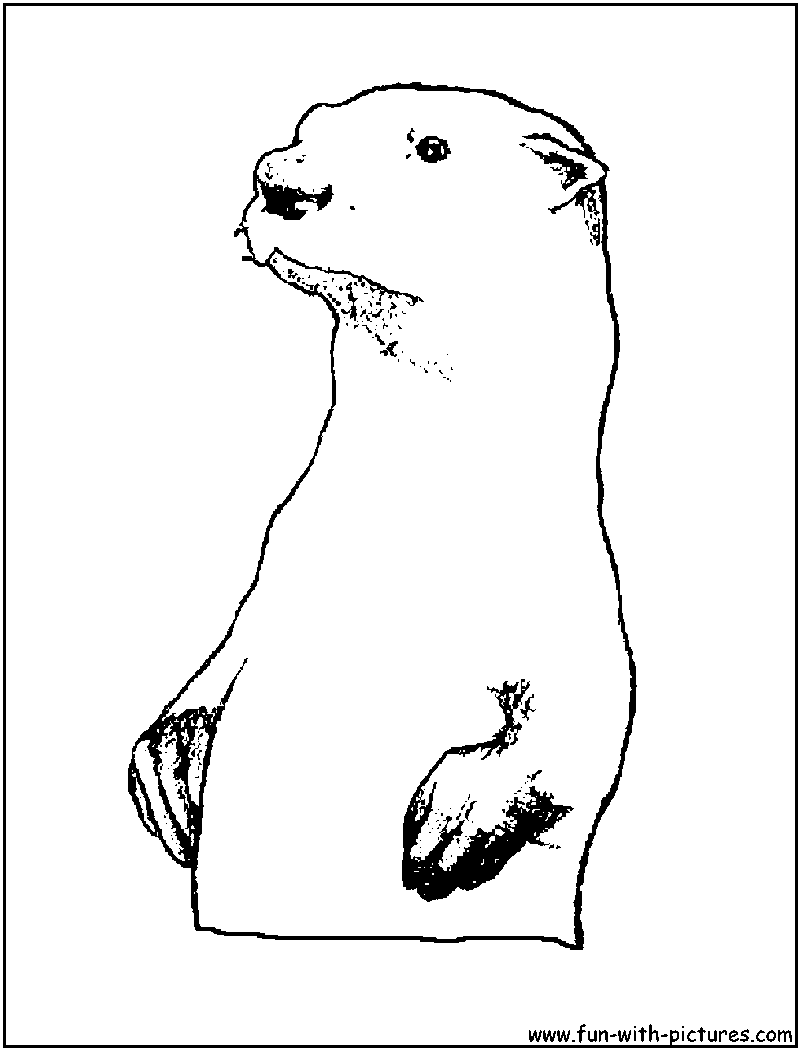 Sea Otter On Back Coloring Pages