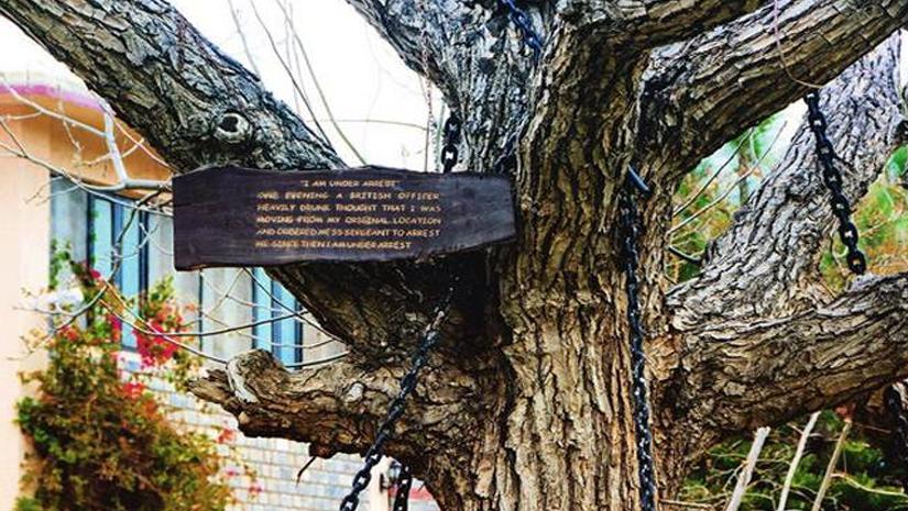 Αποτέλεσμα εικόνας για tree