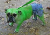 10 Incredibly Nerdy Dog Costumes - FunCage