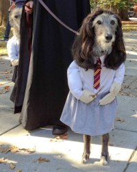 20-Funniest-Dog-Halloween-Costumes-001 - FunCage
