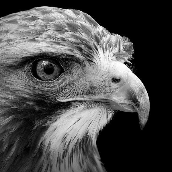 12 Animal Portraits in Black and White - FunCage