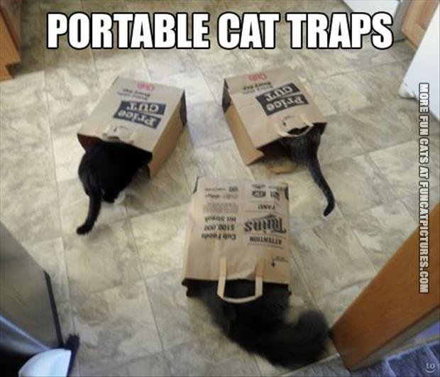 Live Cat Traps For Humane Tring Havahart & Cat Traps Home Depot - The Best Cat In 2017 Aboutintivar.Com
