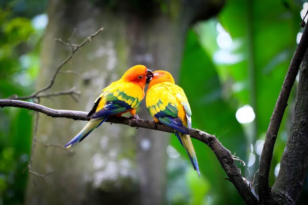 25 affectionate love birds