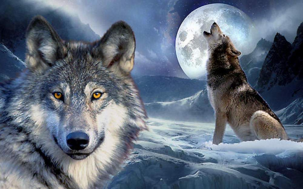 Beautiful Sad Love Quotes Full Hd Wallpapers Cool Wolf Wallpapers 27 Fun Chap